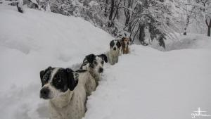 passeggiata sotto la neve-39