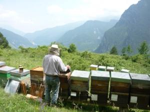 apiario balboutet