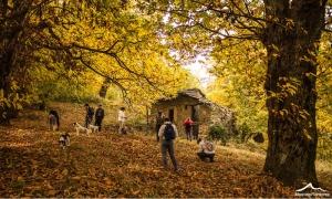 autunno-boschi-castagno-1000_600